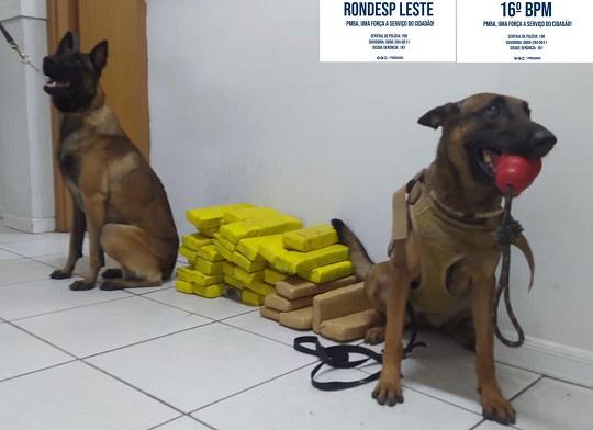 Com ajuda de cães farejadores, PM apreende mais de 30 kg de maconha em Araci